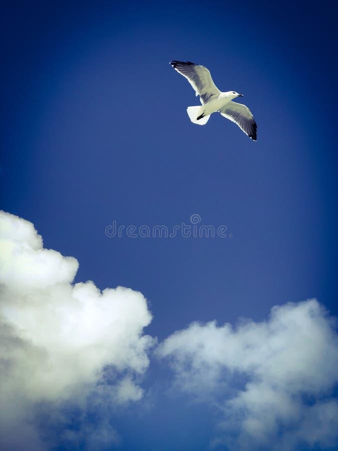 Voo do pássaro de mar no céu azul com as nuvens fotos de stock