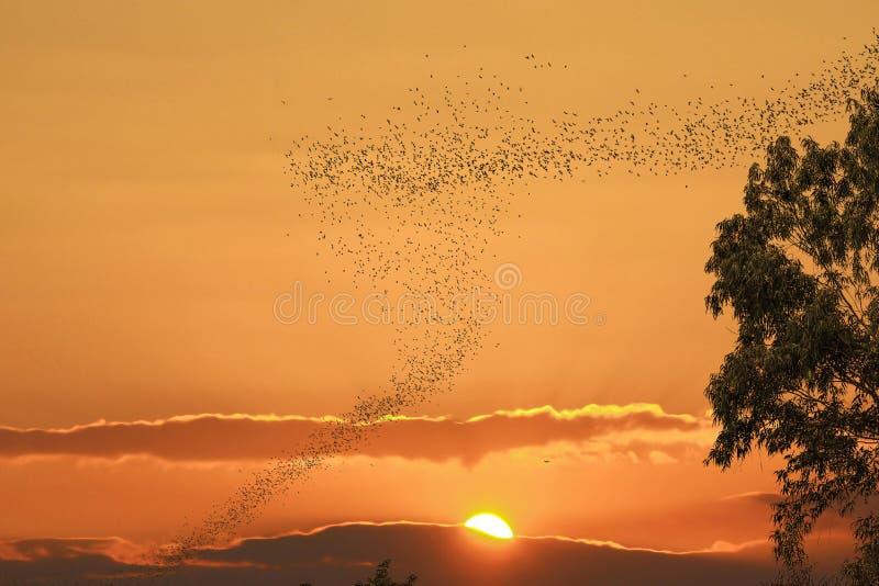 Voo dos bastões contra o sol e o céu dourado imagens de stock