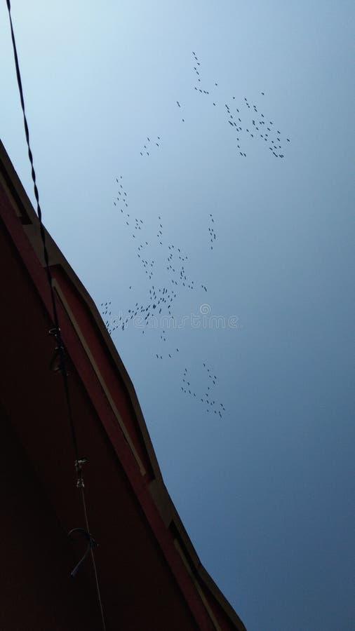 Voo dos pássaros fotografia de stock royalty free