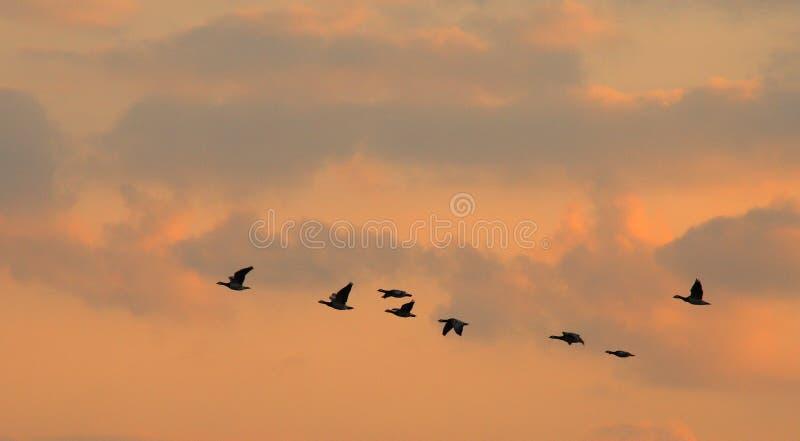 Voo dos pássaros imagens de stock royalty free