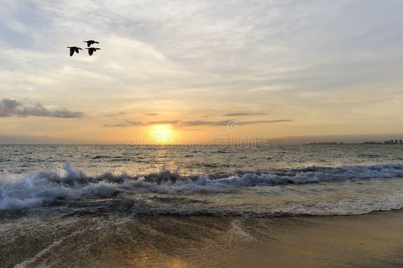 Voo dos pássaros do por do sol imagem de stock