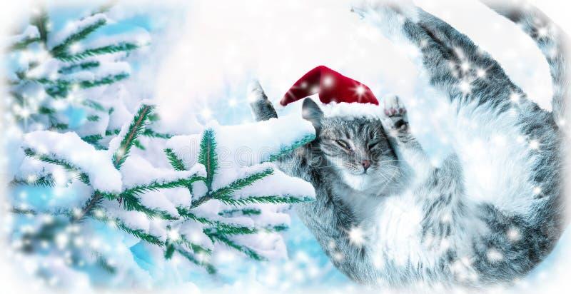 Voo ou gato engraçado de salto de Santa do gato malhado no chapéu vermelho coberto sobre com o fundo da árvore de abeto da neve C fotografia de stock royalty free