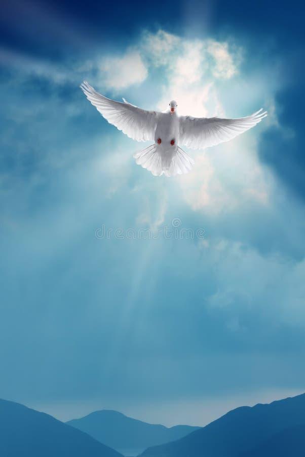 Voo santamente branco da pomba na imagem do vertical do céu azul imagem de stock