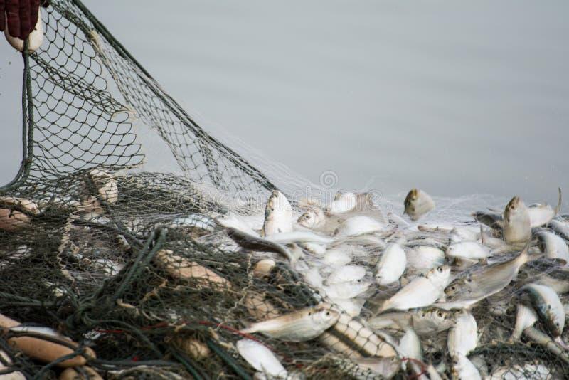 Voor de vissersboot, die vele vissen vangen stock afbeeldingen