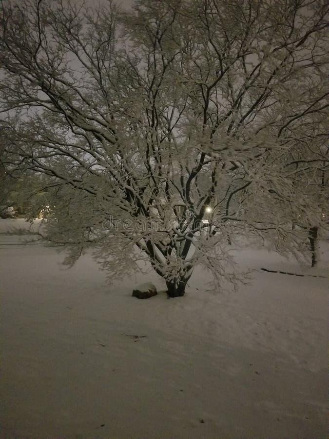 Voor de yardhuis van de sneeuwboom stock foto's