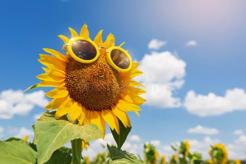Voor een bloeiende zonnebloem gele zonnebril, de zomerconcept, tegen een blauwe hemel stock afbeelding