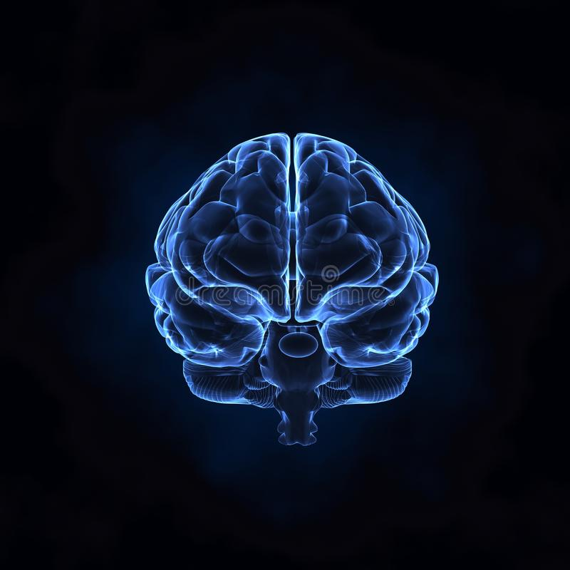 Vooraanzicht van menselijke hersenen stock illustratie