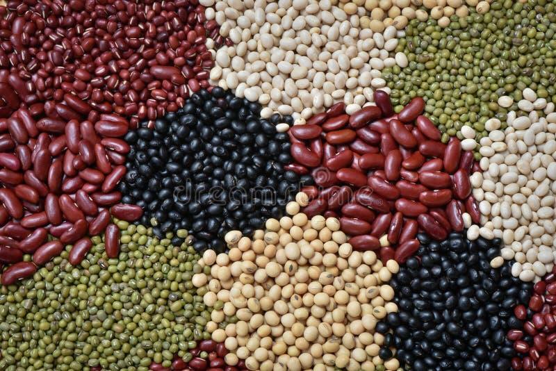 Voorbereide veelkleurige droge peulvruchten organisch voor het koken, Rode boon royalty-vrije stock afbeelding