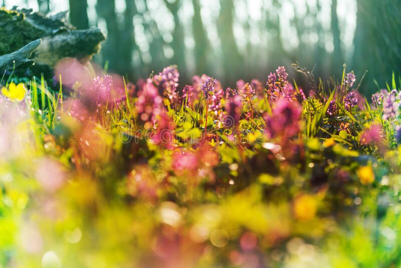 Voorjaarsbos stock foto's