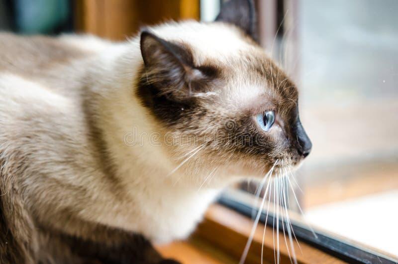Voorzichtige kat stock afbeeldingen