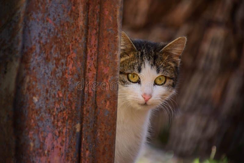 voorzichtigheid Nieuwsgierige pot Schuwe kat die aandacht besteden stock foto's