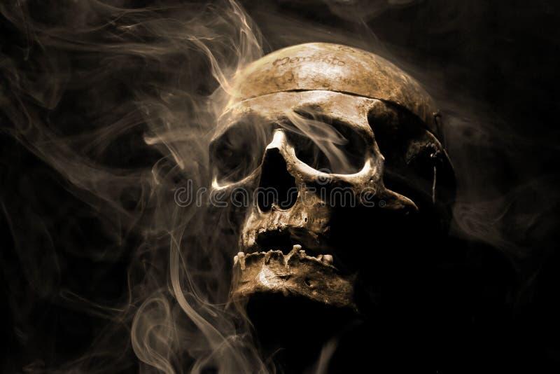 Voorzijde van echte schedel stock fotografie