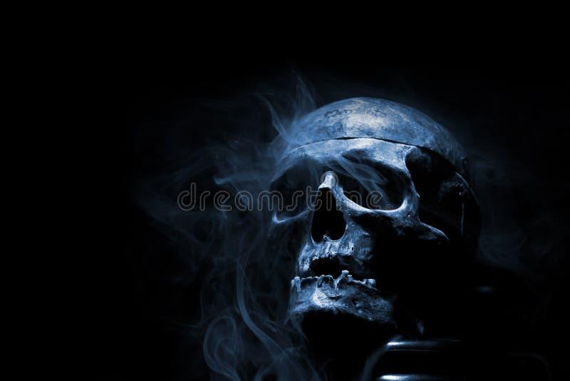 Voorzijde van echte schedel royalty-vrije stock foto