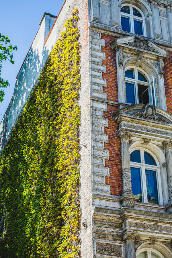 Voorzijde van huis met klimopwijnstokken royalty-vrije stock afbeeldingen
