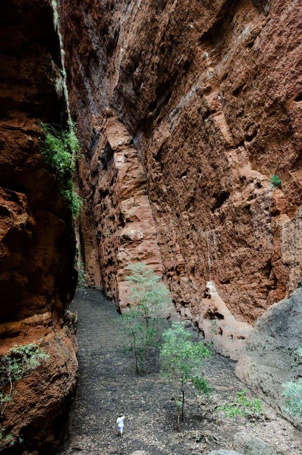 Voragine dell'echidna - Purnululu NP - l'Australia fotografie stock