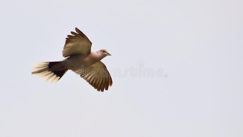 Vorbei fliegen stockbild