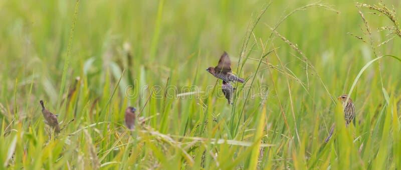 Vorbei fliegen lizenzfreie stockfotos