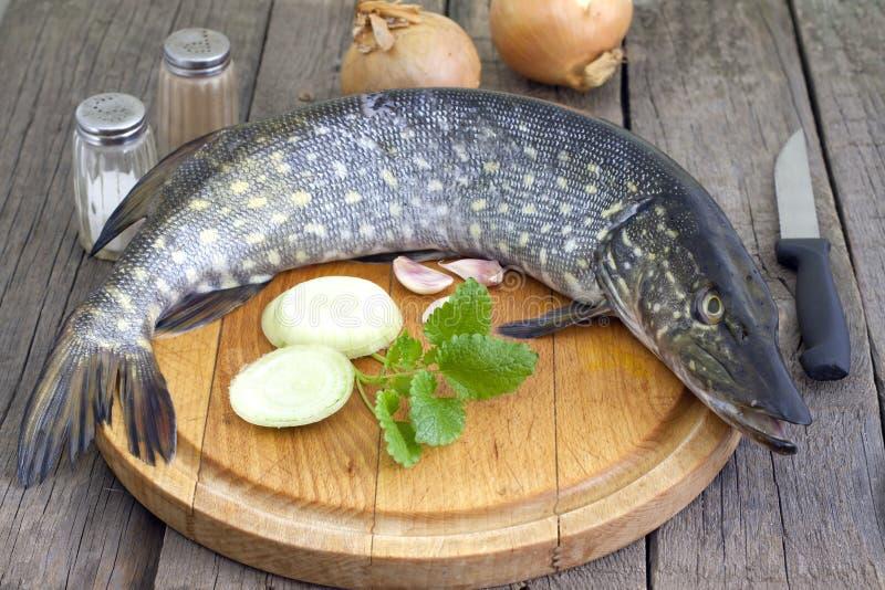 Vorbereitung der Pike-rohen Fische zum Backen stockfotos