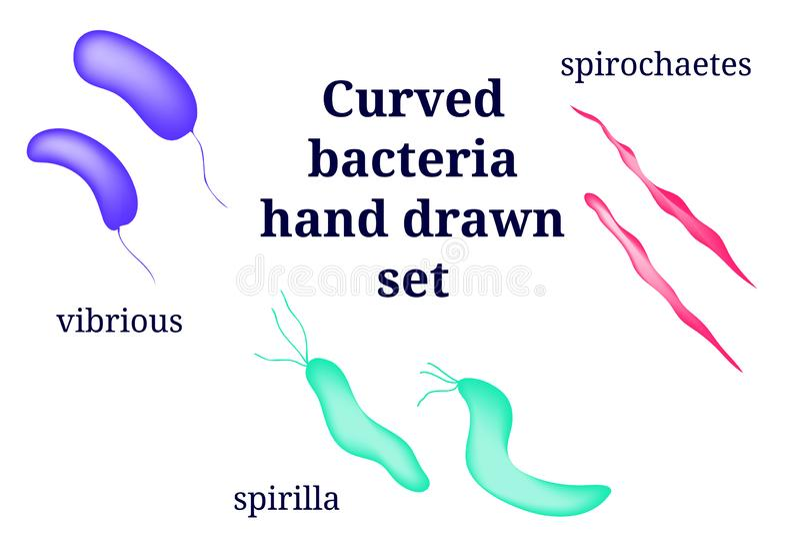 Vorbereitungen für gebogenen bakteriellen Mikroorganismus vektor abbildung
