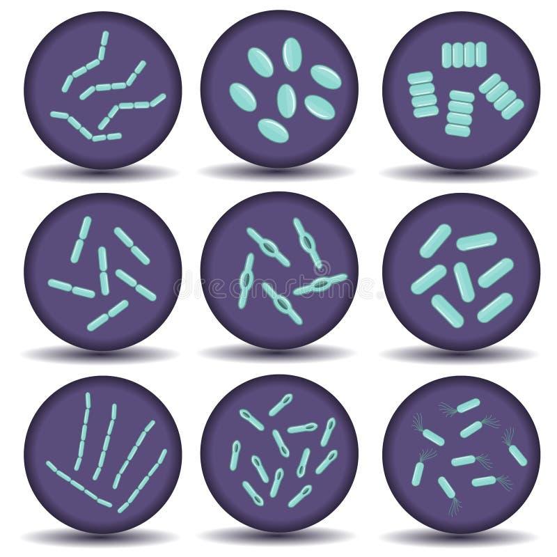 Vorbereitungen für grünen Bazillus Bakterien lizenzfreie abbildung