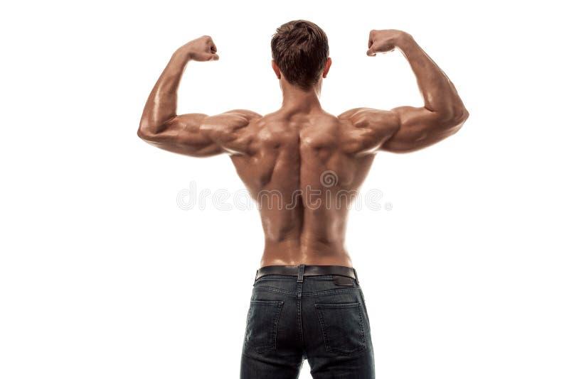Vorbildliche Aufstellungsrückenmuskulatur der starken athletischen Mann-Eignung, Trizeps über weißem Hintergrund Kopieren Sie Pla lizenzfreie stockfotos