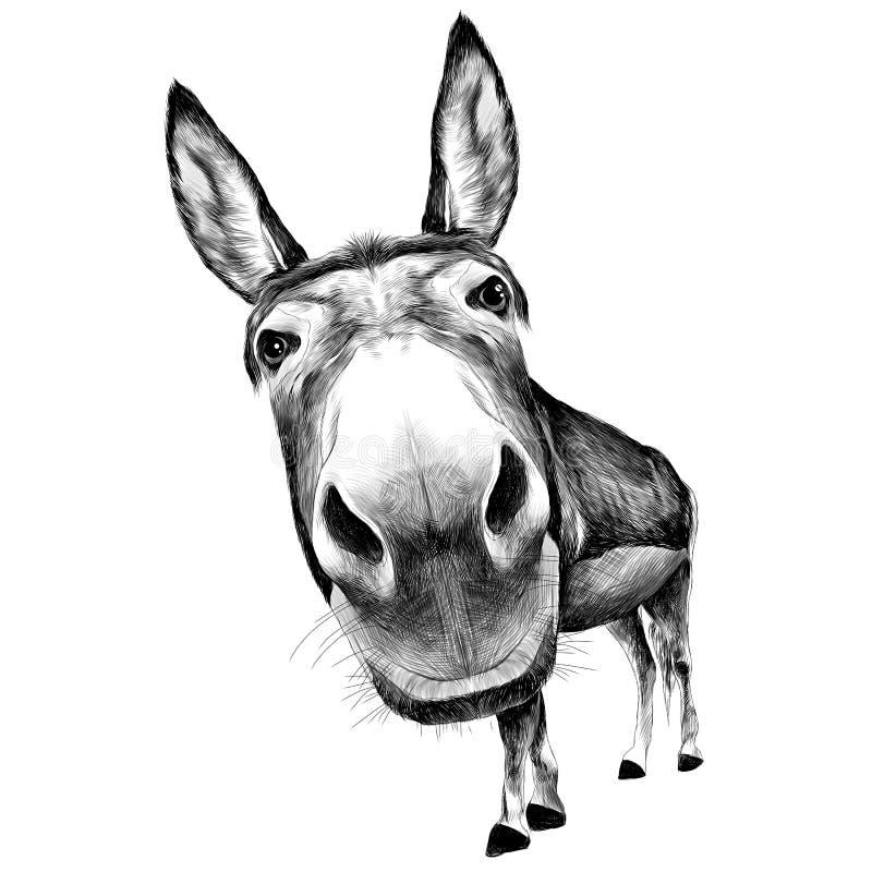 Vorderansicht des Esels mit einem großen Kopf stock abbildung