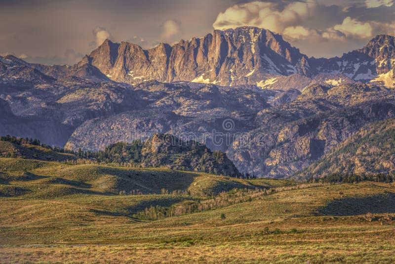 Vordergrund-Wyoming-Wildflowers und Sägezahn-Berge lizenzfreie stockfotos
