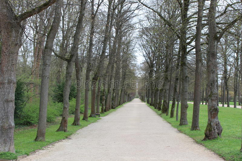 Vorfrühling im Park lizenzfreies stockbild