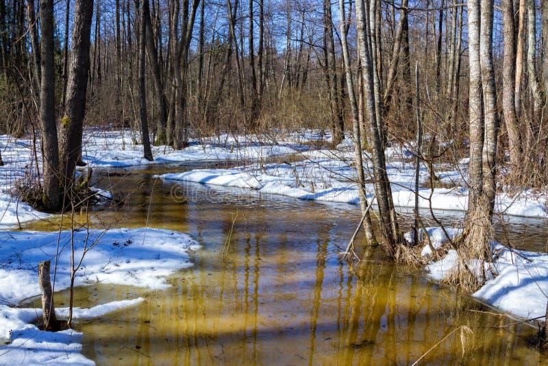 Vorfrühling im Wald, sonnige Marschlandschaft stockbild