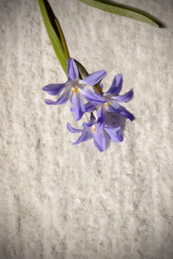 Vorfrühlingsblumen unter dem hellen Sonnenschein stockfoto