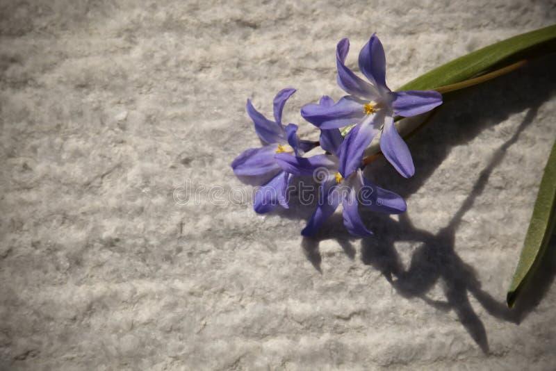 Vorfrühlingsblumen unter dem hellen Sonnenschein stockbilder