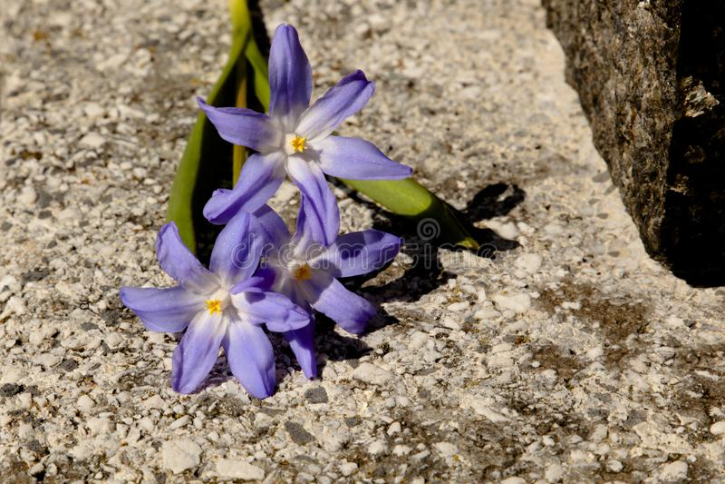 Vorfrühlingsblumen unter dem hellen Sonnenschein lizenzfreie stockfotos