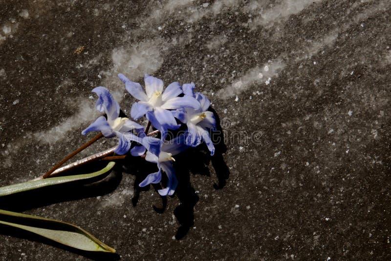 Vorfrühlingsblumen unter dem hellen Sonnenschein lizenzfreies stockfoto