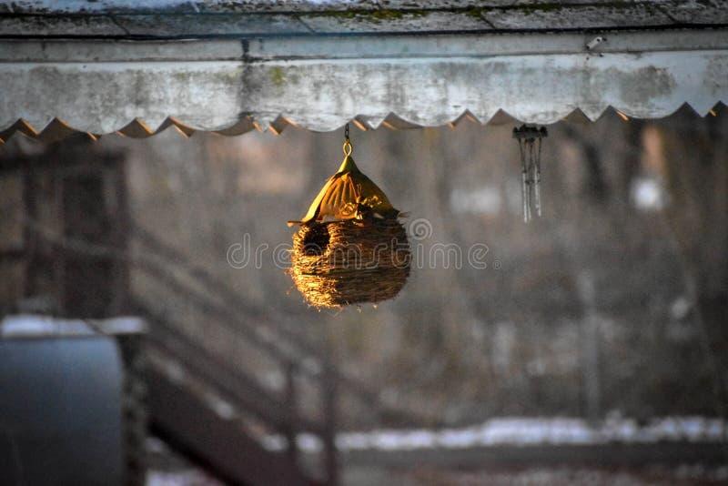 Vorfrühlingswärme des Sonnenscheins lizenzfreies stockfoto