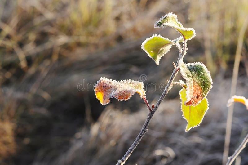 Vorige herfst bladeren in een het fonkelen vorst de verandering van de herfst en de winter royalty-vrije stock afbeeldingen