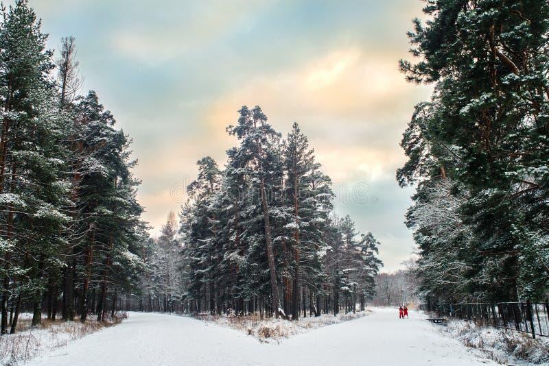 Vork op een bosweg royalty-vrije stock fotografie