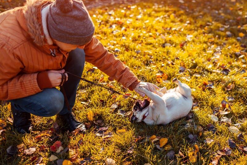 Vorlagenspielen mit Pughund im Herbstpark Glücklicher Welpe, der auf Gras durch die Beine des Mannes liegt Hund, der Spaß hat stockfotos