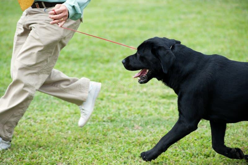 Vorlagenspielen mit seinem Hund lizenzfreie stockfotos