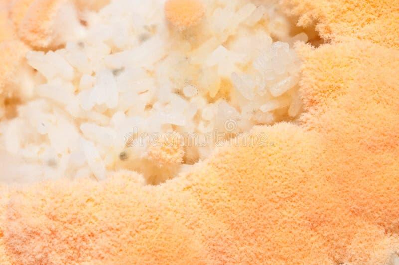 vorm in rijst stock foto
