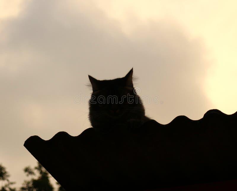 Vorm van kat op het dak wordt gezeten dat royalty-vrije stock foto's