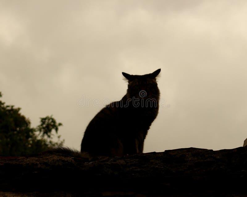 Vorm van kat op het dak wordt gezeten dat stock afbeelding