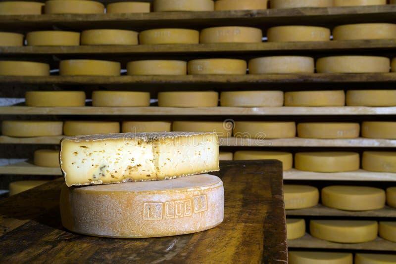 Vormen van het rijpen van kaas royalty-vrije stock foto's