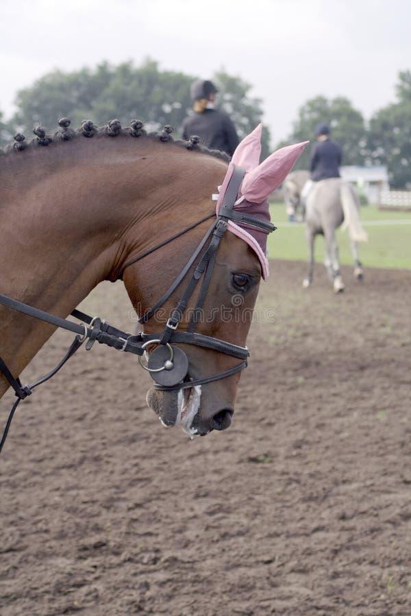 Vornehmes Pferd