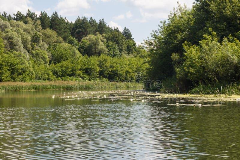 Vorona river stock image