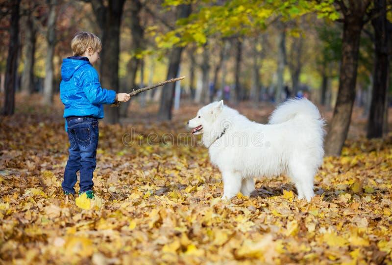 Vorschuljunge, der mit seinem Samoyedhund im Park spielt lizenzfreies stockbild