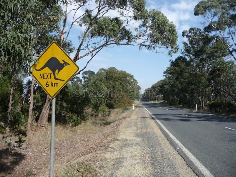 Vorsichtig: Känguru lizenzfreie stockfotografie