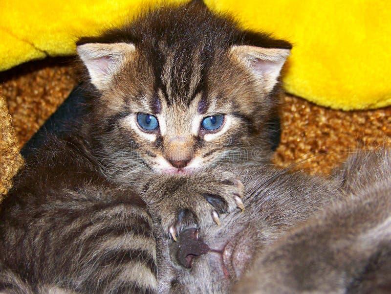 Vorsichtige Katze stockbild