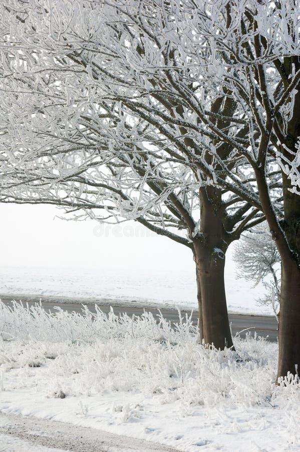 Vorst op bomen in sneeuw royalty-vrije stock foto's