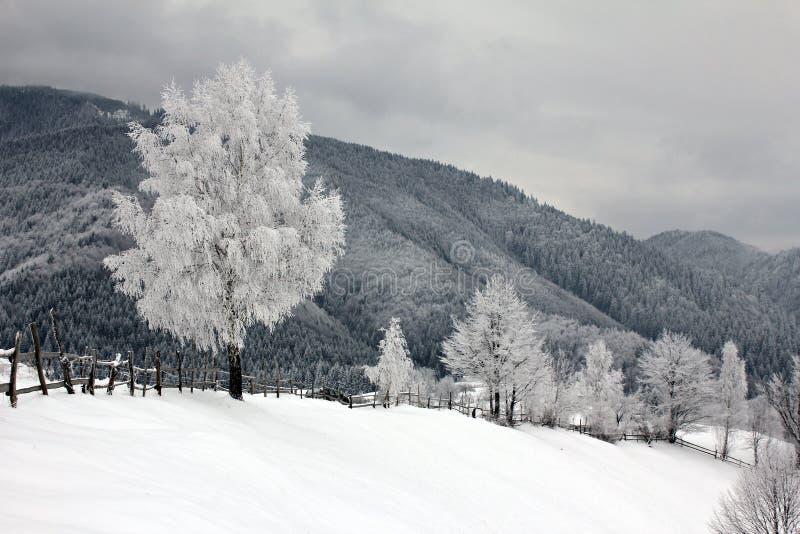 Vorst op de bomen en het bos met sneeuw worden behandeld die royalty-vrije stock afbeeldingen
