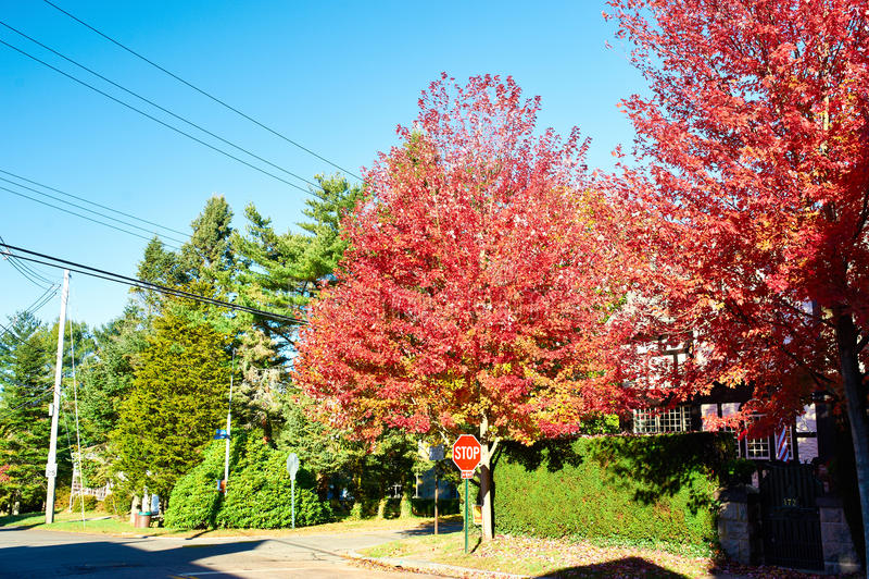 Vorstadtnachbarschaft im Herbst stockfotos